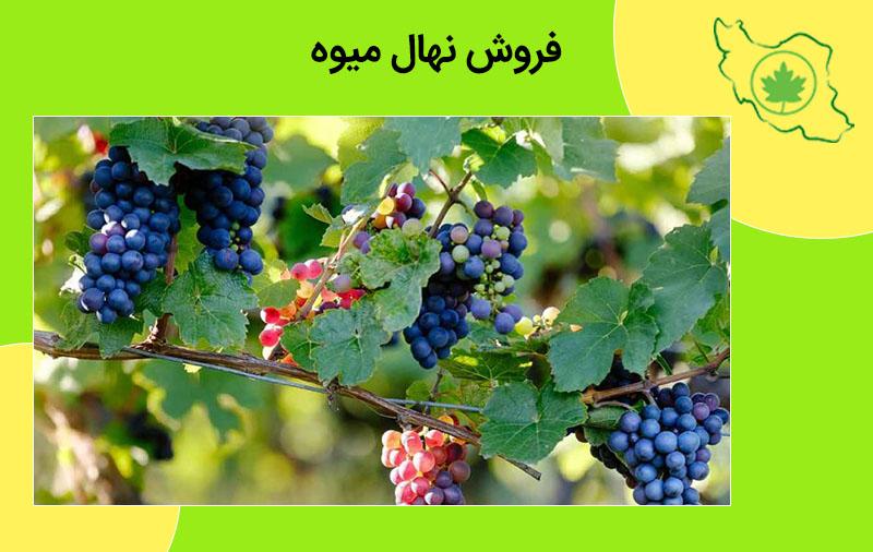 فروش نهال میوه