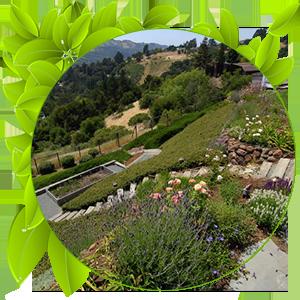 طراحی باغ شیب دار
