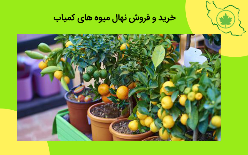 خرید و فروش نهال میوه های کمیاب