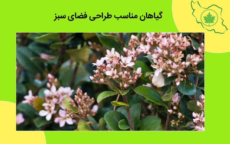 گیاهان مناسب طراحی فضای سبز