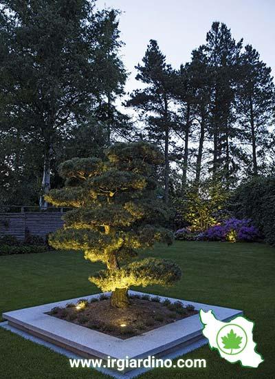 نورپردازی درخت