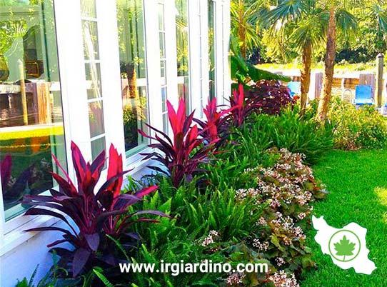گیاهان در محوطه سازی ویلا