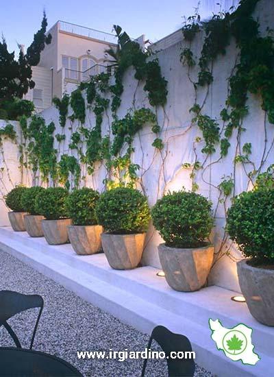 گیاهان مناسب بالکن
