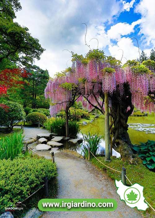 درخت تزیینی رنگی